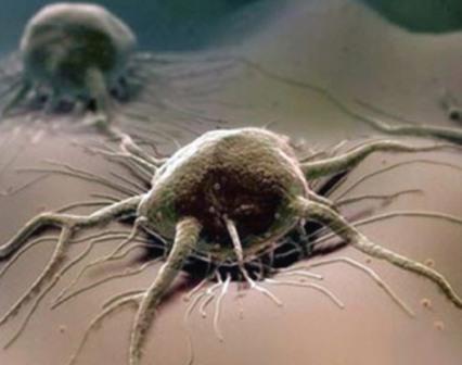 Враг человека под микроскопом, идентифицируем и избавляемся