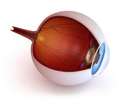 Хориоидея – сосудистая оболочка глаза, она питает сетчатку, участвует в поддержании внутриглазного давления и температуры глазного яблока