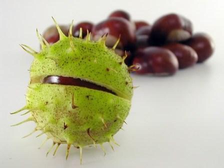 Настойка плодов каштана отличается противовоспалительным эффектом и имеет противоотечное действие