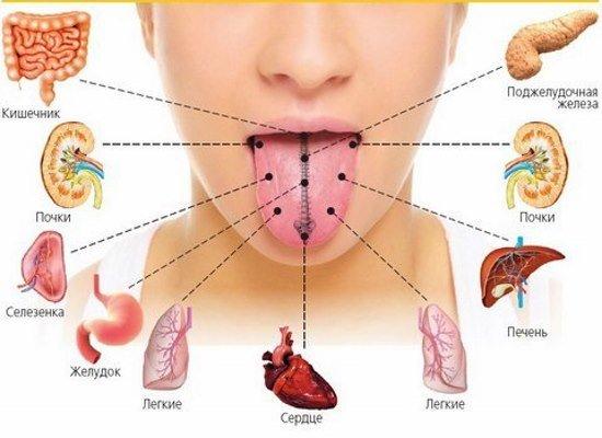 Щитовидная железа отвечает за работу целого организма