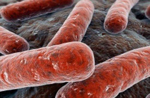 Бактерия Mycobacterium (палочка Коха) – возбудитель туберкулеза