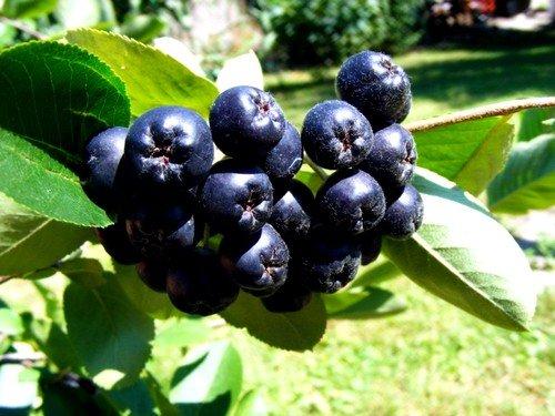 Маска из чёрноплодной смородины