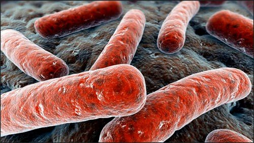 Симптомы и лечение туберкулеза 🚩 как лечить туберкулёз 🚩 Лечение болезней