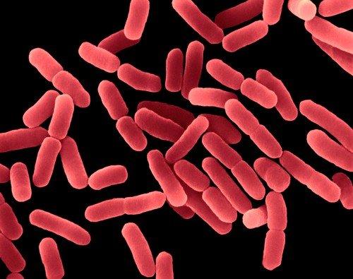 Бартолинит возникает в организме после того, как туда проникают различные возбудители инфекции