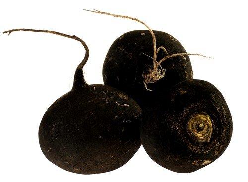 Чёрная редька