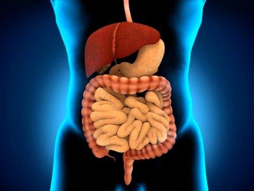 Важна проверка состояния пищеварительной системы