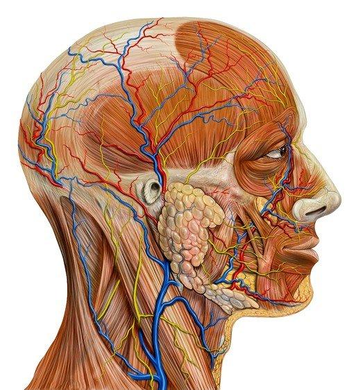 УЗИ сосудов головного мозга в некоторых случаях является единственным способом спасти жизнь человеку