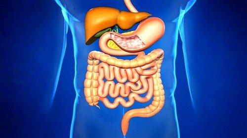восставновление работы пищеварительной системы организма