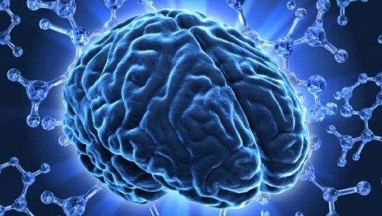 «Гормоны счастья» вырабатываются головным мозгом