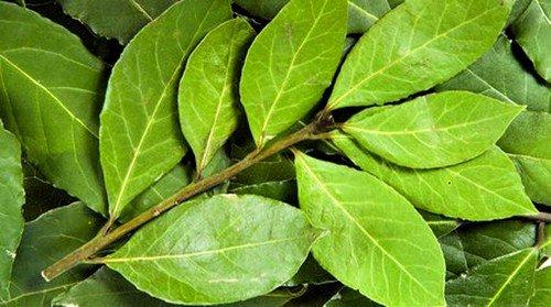 Сухие лавровые листы