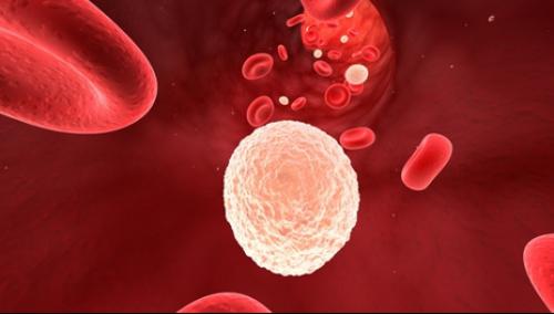 Белые кровянистые клетки в моче