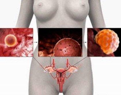 Эстрогены в организме женщины