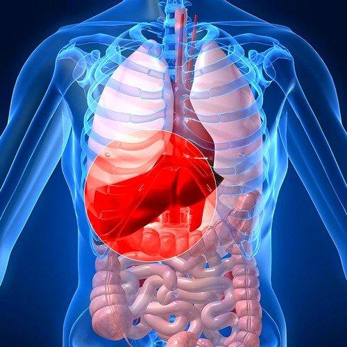 Первичный билиарный цирроз печени относится к клиническому проявлению заболеваний, имеющих аутоиммунный характер