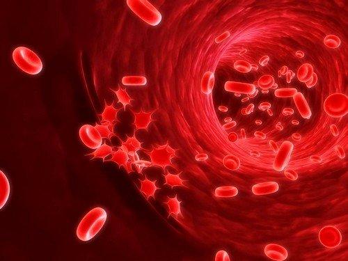 самыми основными причинами заболевания крови являются снижение иммунитета