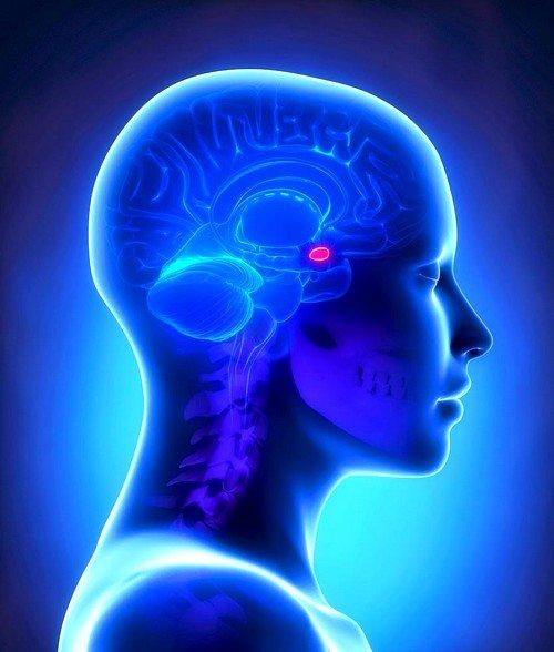 Аденома гипофиза представляет собой доброкачественное новообразование, которое локализуется в питуитарной железе головного мозга