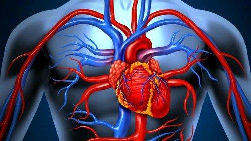 Сердечная недостаточность может быть классифицирована по происхождению: миокардиальная, перегрузочная, смешанная