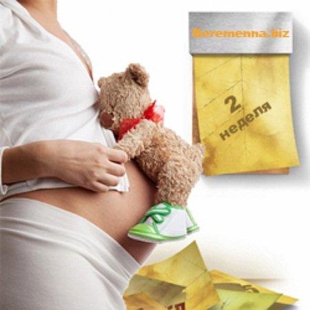 Как развивается беременность на 2 неделе
