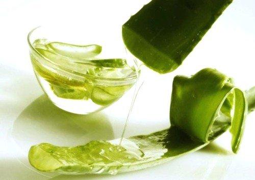 В борьбе с растяжками поможет сок алоэ