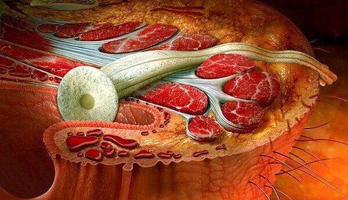 Свищ прямой кишки — это образовавшийся в районе прямой кишки канал, который начинается в ее нижних отделах и заканчивается на ягодичной коже или в толще жировой клетчатки, которая находится вокруг прямой кишки