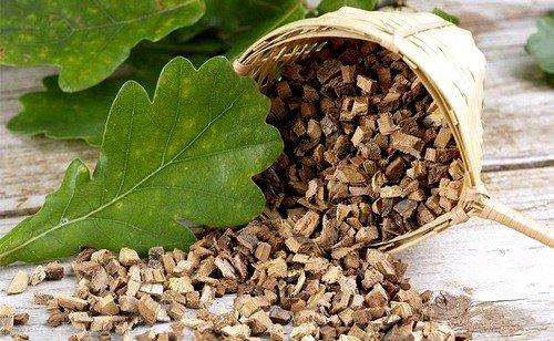 Отвар из дубовой коры эффективен при воспалении десен