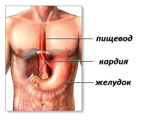 Ахалазия кардии и ее причины, симптомы, методы лечения фото