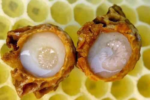 Пчелиное молочко нельзя принимать с едой или жидкостью