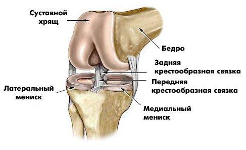 Как устроен мениск коленного сустава