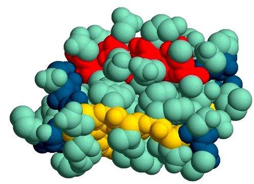 белок играет важную роль во многих физиологических процессах