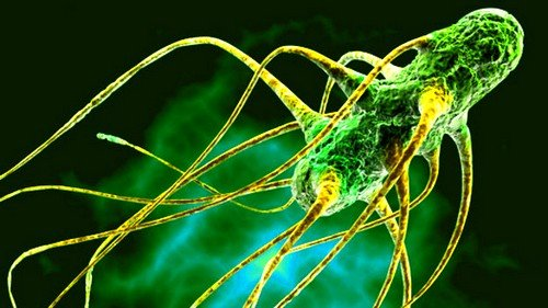 Возбудителями данного заболевания у детей являются различные вирусы и микробы