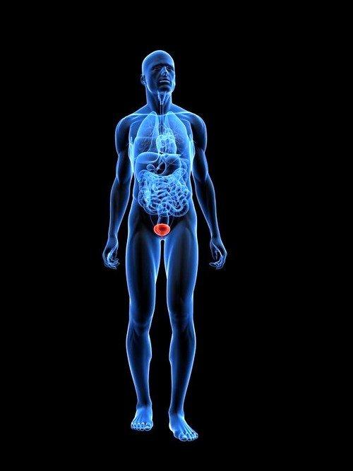 Данная процедура полезна для диагностики опухолей, мочекаменной болезни и длительной гипертермии