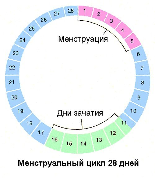 Менструальная фаза у женщины начинается с первого дня критических дней