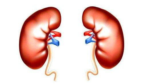 Пиелонефрит – это заболевание, при котором бактерии, попадая в мочевыделительную систему, провоцируют воспалительные процессы в почках