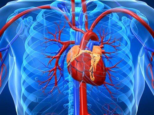 повышение эритроцитов в крови может привести к нарушению процесса кровоснабжения