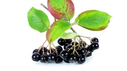 Какие лечебные свойства и противопоказания имеет черноплодная рябина фото