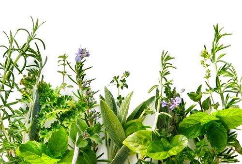 Большой популярностью кроме медикаментозных препаратов пользуются и мочегонные травы при отеках