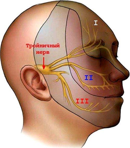 Тройничный нерв является самым большим нервным каналом в области черепа