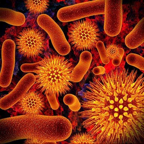 С помощью ПЦР можно обнаружить вирусы В и С в организме