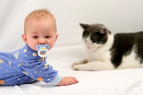 Во время контакта человека с животными возможно заражение