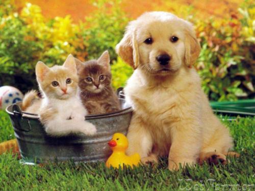 Аллергию у ребенка могут вызывать животные