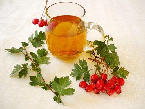 Для улучшения состояния принимают чай из боярышника