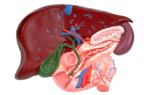Холецистит: симптомы, лечение фото