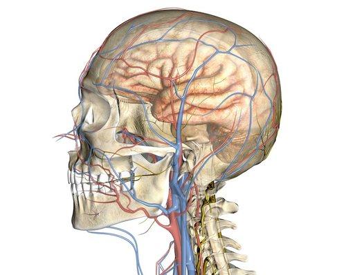 УЗИ сосудов головного мозга и шеи информативно и безопасно