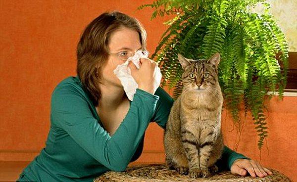 Предрасполагающим фактором развития аллергии может быть шерсть животных