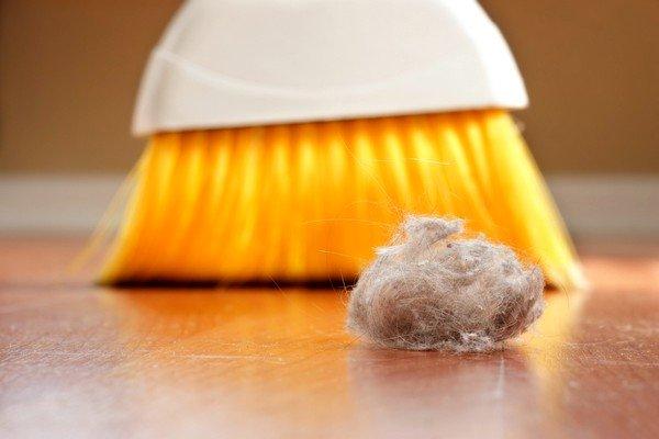 Аллергическая реакция на пыль обычно наблюдается не на неё саму, а на различные микроорганизмы, в ней живущие