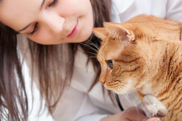 Источником аллергии может быть домашнее животное