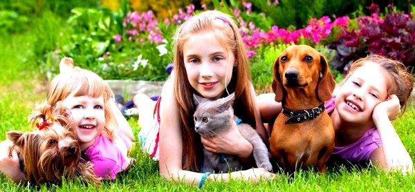 В лабораторных условиях выяснено, что кошки имеют разные типы раздражителей, и это дает возможность найти домашнее животное, на которое не будет возникать патологической реакции