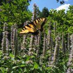 На что бывает аллергия в августе
