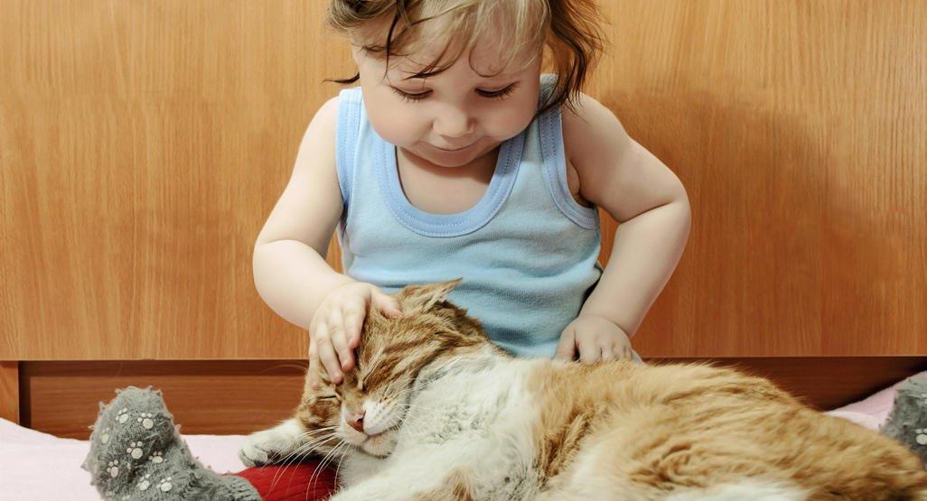 При развитии повышенной чувствительности к домашним животным следует ограничить вашего ребенка от нахождения в одном помещении с кошками, собаками