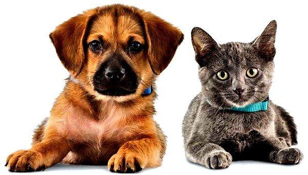 Домашние животные могут стать причиной аллергии