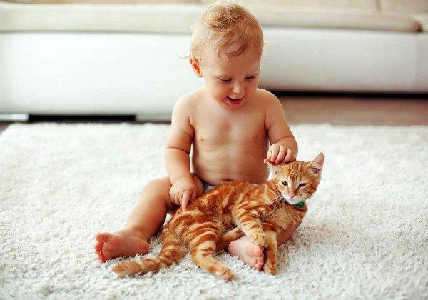 Наиболее часто возникают аллергические проявления, если в доме находится кошка